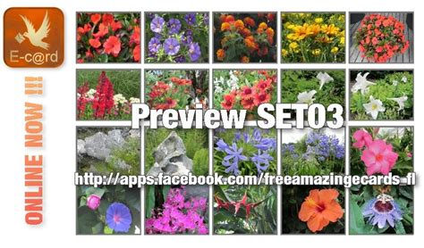 awesome plants flowers ecards release amazing set03