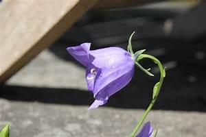 Blumen Im November : blumen im november iceland review ~ Lizthompson.info Haus und Dekorationen