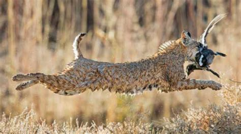 nwf announces national wildlife magazines  photo