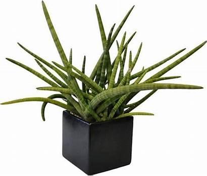 Plants Indoor Interior Katydidandkid