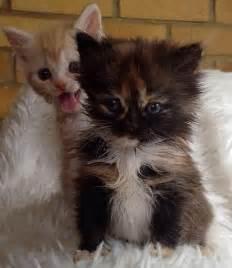 cat bomb 22 animal photobombs pleated