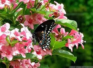 Beautiful Spring Photos Butterflies Wallpaper | Free HD ...