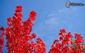 Baum Mit Roten Blättern : rote bl tter ~ Eleganceandgraceweddings.com Haus und Dekorationen