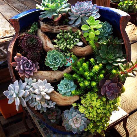 beautiful broken pot at succulent gardens succulent container gardening
