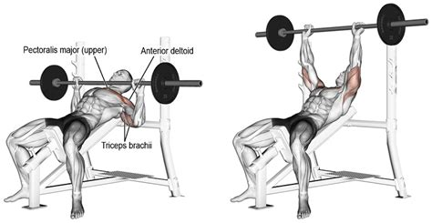 incline bench press best chest workout for explosive gains