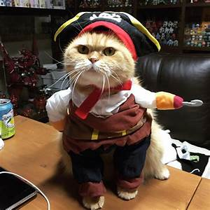Collegial Cat Allows His Humans to Dress Him In a 'Jack ...