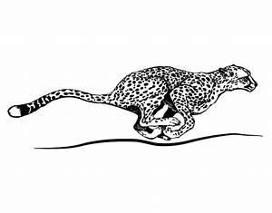 Dessin Jaguar Facile : coloriage de gu pard qui court pour colorier ~ Maxctalentgroup.com Avis de Voitures