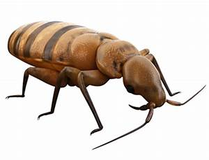 Bed bugs archives arrow exterminating services arrow for Bed bug smell