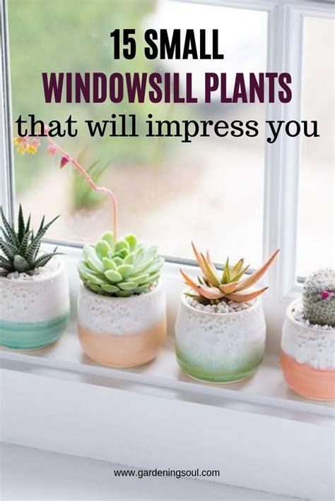 plants stay cactus gardeningsoul sill window needs sun plant