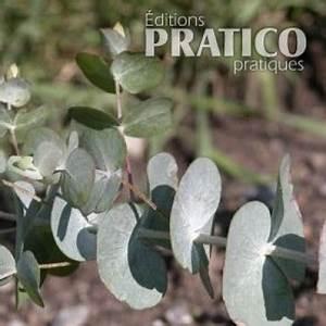 Eucalyptus Plante D Intérieur : eucalyptus 39 silver drop 39 fiches de plante jardinage et ext rieur pratico pratique ~ Melissatoandfro.com Idées de Décoration
