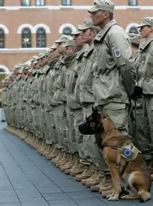 Navy SEAL Military Dogs