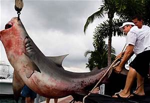 Boy catches 250kg shark | Travel | Travel News and Holiday ...