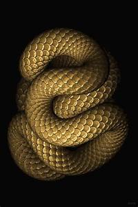 Large Snake Natural World of Living Things