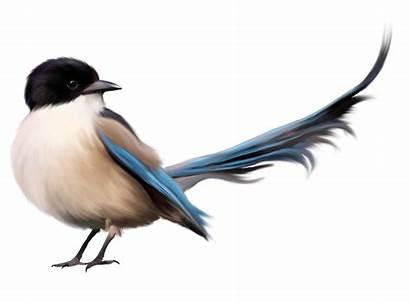 Photoshop Tutorial Bird Tail Editz Clipart