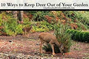 How to keep deer out of your garden stop feeding them for Keep deer out of garden