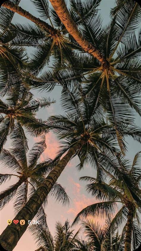 viviimoreira fotografi alam pemandangan