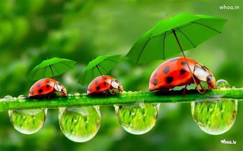 bugs  green umbrellas hd insects fun wallpaper