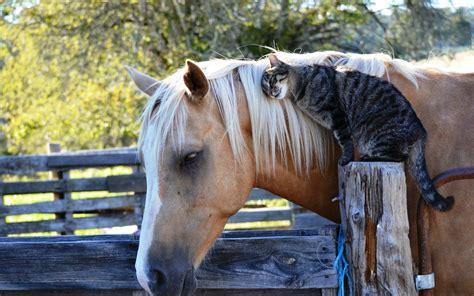 Cat & Horse - Animals Photo (33788343) - Fanpop