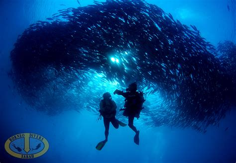 borneo divers pioneer in scuba diving sipadan mabul