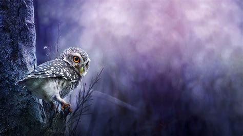 Background Owl Wallpaper by Baby Owls Baby Owl Hd Wallpaper Child