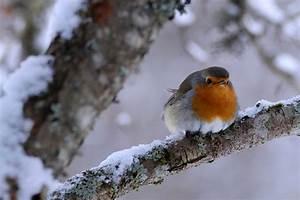 Vögel Im Winter Kindergarten : rotkehlchen lbv ~ Whattoseeinmadrid.com Haus und Dekorationen