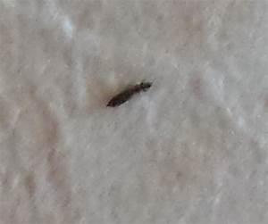 Kleine Schwarze Käfer Im Haus : kleine schwarze k fer in meinem bett insekten ~ Lizthompson.info Haus und Dekorationen
