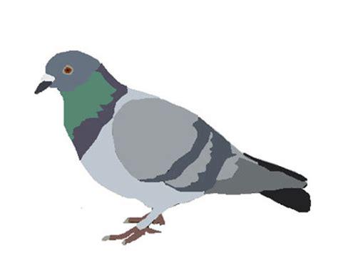 le pigeon en ville 233 cologie de la r 233 conciliation 199 a se passe au jardin
