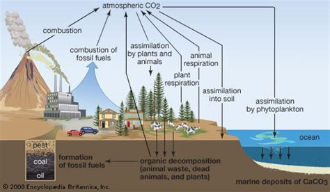 Define Carbon Sink Geography by Biogeochemical Cycle Science Britannica