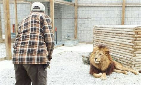 roadside zoo need wildlife animals inc abused been publicly somehow still open years credit