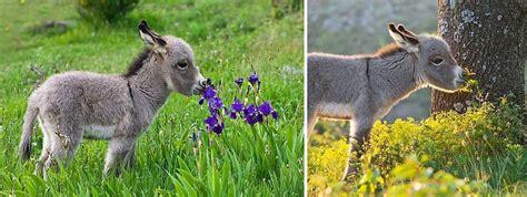 15 dzīvnieki, kuri dievina ziedu smaržu - Puaro.lv