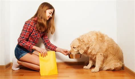dog food  golden retrievers  vet recommended