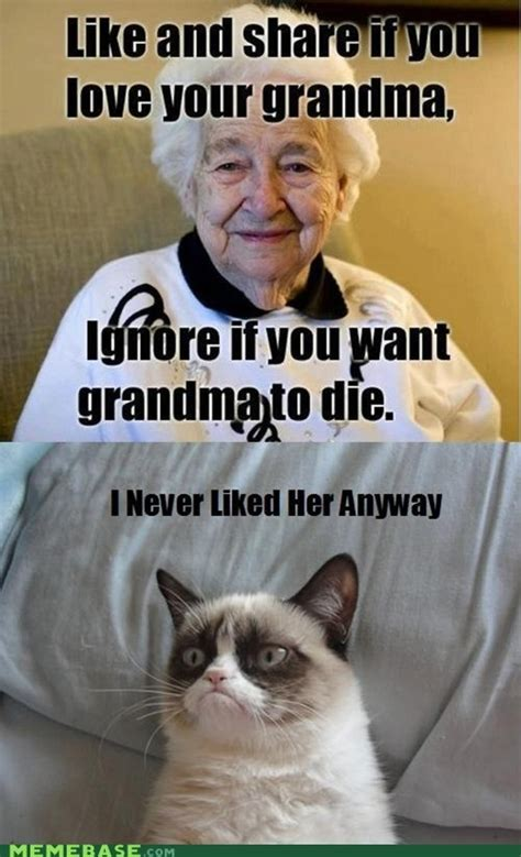 Meme For Grandmother - 17 best images about cat on pinterest gift quotes memes humor and grumpy cat birthday