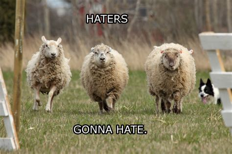 Sheep Memes - haters gonna hate sheep edition haters gonna hate know your meme