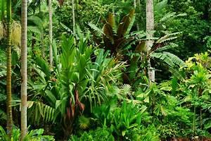 Pflanzen Im Juli : pflanzen in australien australien guide ~ Orissabook.com Haus und Dekorationen