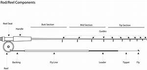 Basic Fly Fishing Rod  Reel  Line  And Leader Information