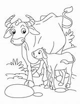 Coloring Buffalo Pages Animals Babies Water Farm Drawing Cape Calf Printable Az Adult Coloringhome Getdrawings Getcolorings Popular Native sketch template