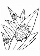 Coloring Insects Pages Ladybug Flying Print Cute Squirrel Drawing Animal Children Leaves Adult Cliparts Clipart Ladybugs Printable Library Animals Clip sketch template