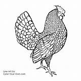 Rooster Chicken Coloring Pages Sebright Line Chickens Own Adult Hen Clipart Decal Clip Patterns Custom Burning Wood Printable Embroidery Library sketch template