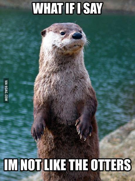 Sea Otter Meme - just an otter meme otter meme memes and funny