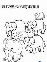 Collective Elephants Herd Coloring Colouring Diddle Nouns Hey Noun Colorare Elefanti Template Fiddle Cat Elefante Creativi Activities Own Gaggle Stampare sketch template