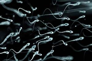 Semen Reshapes Immune System To Boost Chances Of Pregnancy