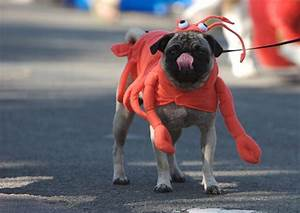 some amazing dog costumes 9 of the best
