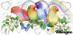 Rainbow Love Birds Animated Pictures for Sharing #70223883 ...