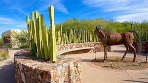 Tohono Chul Park In Tucson  Arizona