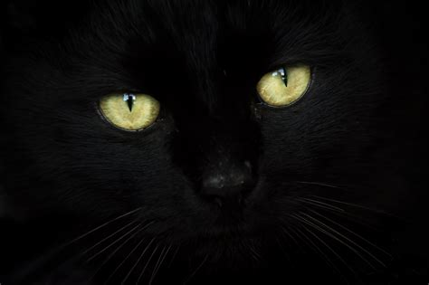 wallpaper black green eye cat blackcat eyes chat