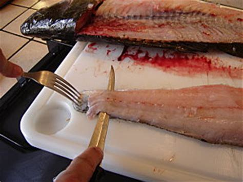 cuisiner le silure comment cuisiner le silure 28 images comment cuisiner