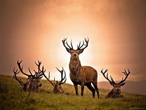 incredible  award winning national geographic animal