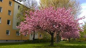 Rosa Blühende Bäume April : was bl ht im fr hjahr gartennatur ~ Michelbontemps.com Haus und Dekorationen