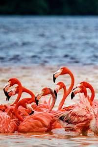 17 Best images about Celestun, Yucatan, MX on Pinterest ...