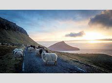 Faroe Islands use sheep cameras to create Google Street